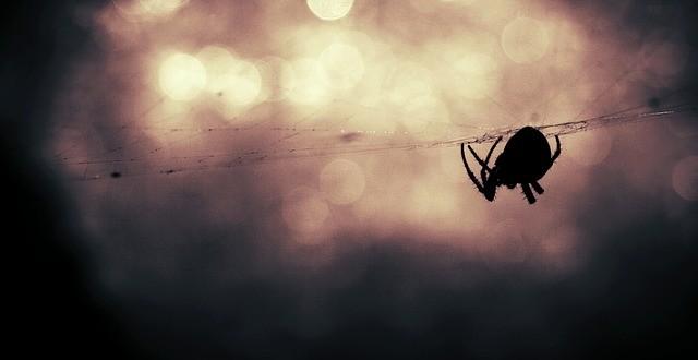 24c67037e96d653d_640_spider