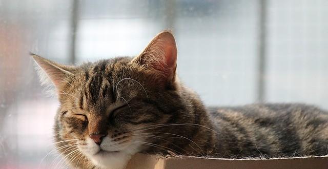 5452cab11d1d1025_640_cat-sleep